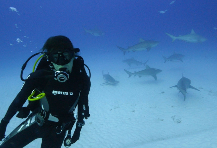 Entre tiburones en Playa del Carmen