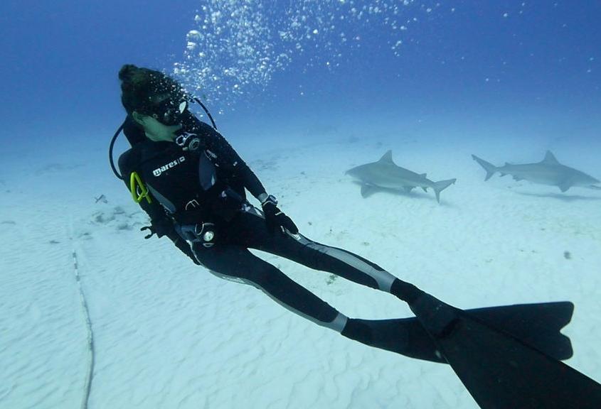 Entre tiburonas toro