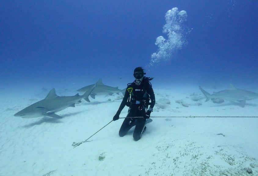 Tiburonas Toro en la Riviera Maya